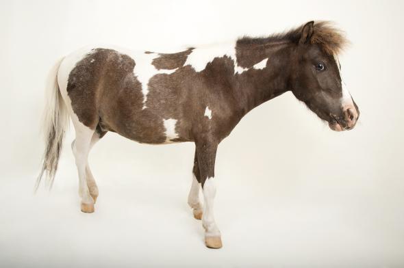 horse.adapt.590.1.jpeg