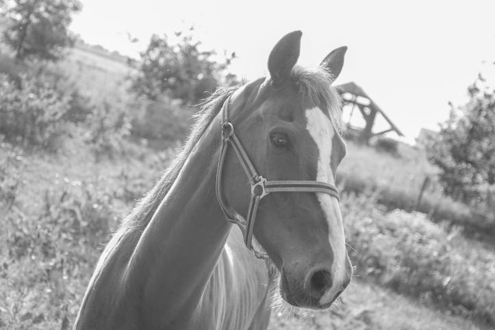 horse-animal-fauna-black-437611.jpeg