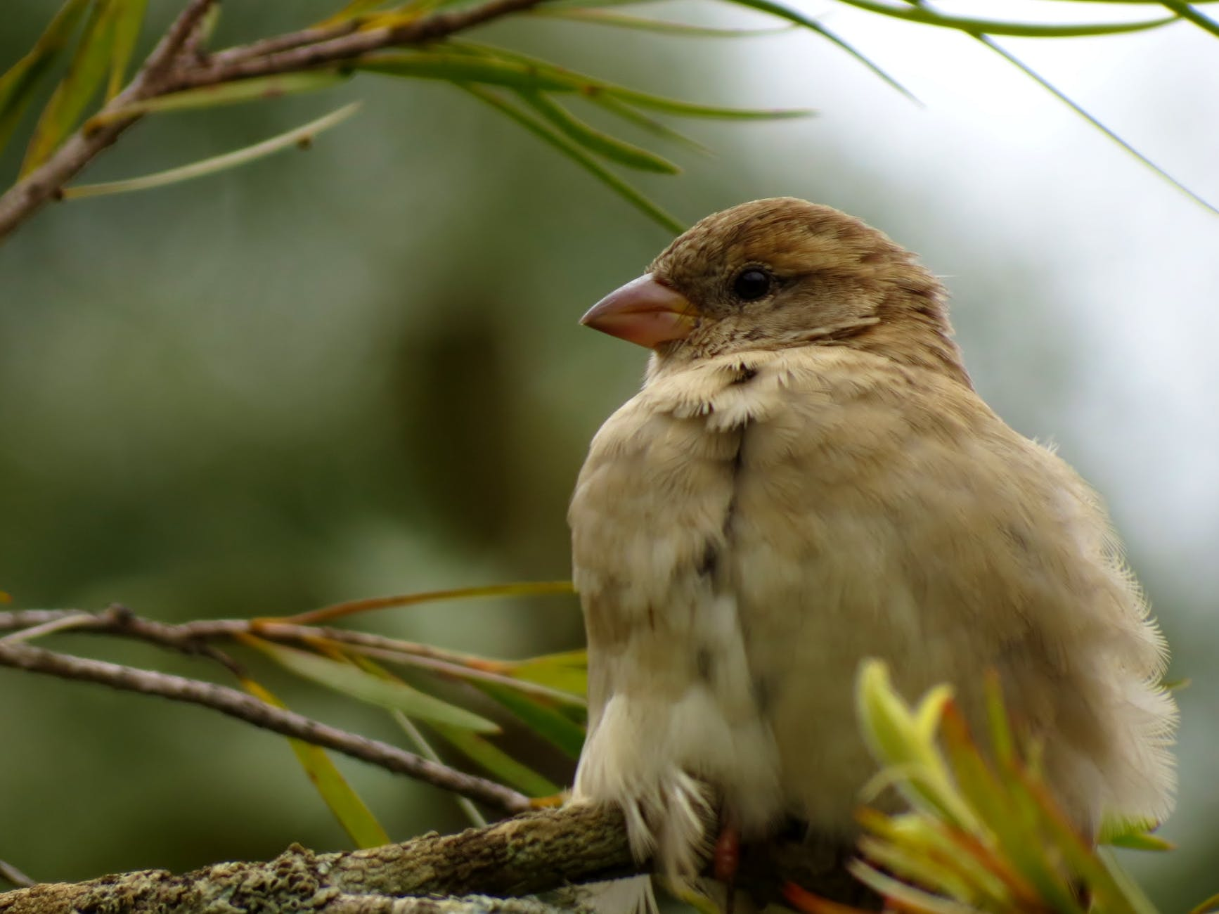 sparrow bird animal